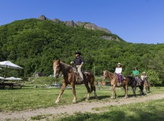 Horseback Riding in Sapporo_Wild Mustangs