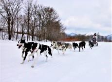 Dog Sledding, Hokkaido