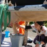 札幌牛の乳搾り体験_ホテルエミシア札幌発着タクシープラン