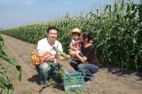 北海道トウモロコシ狩り体験_恵庭吉田農場
