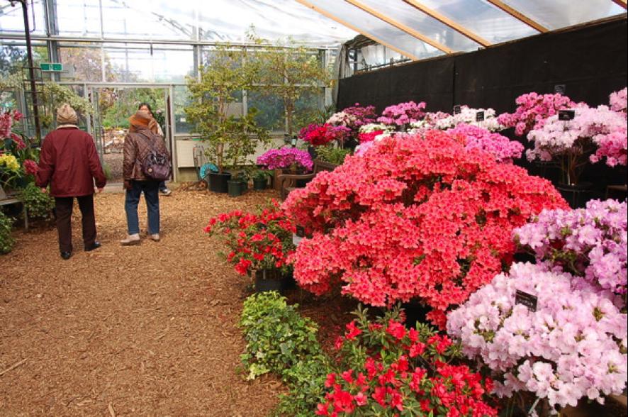 「百合が原緑のセンター」で「春の花展」が開催!