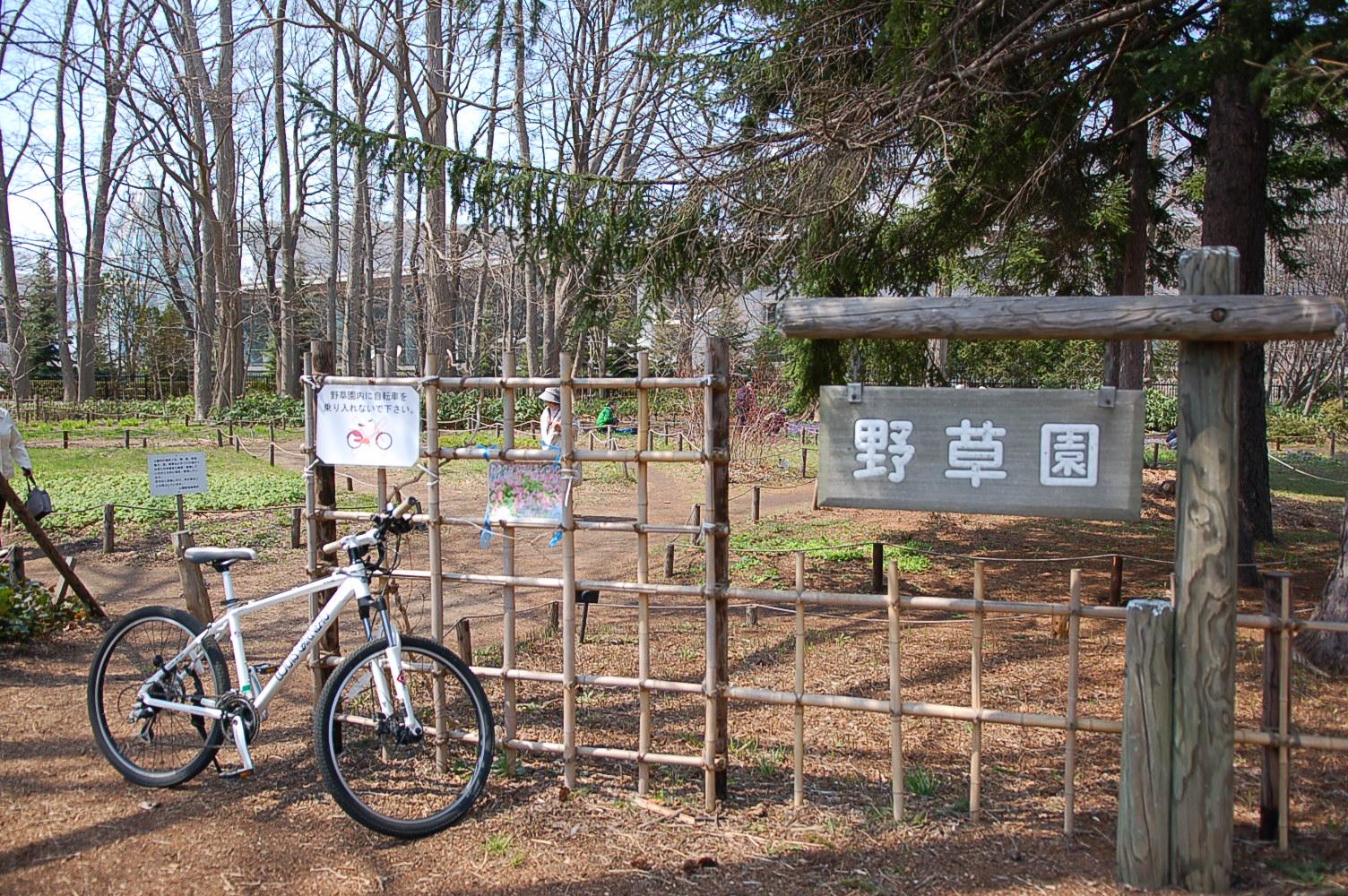 """""""豊平公園では春の妖精「カタクリ」の群生が見られます!"""""""