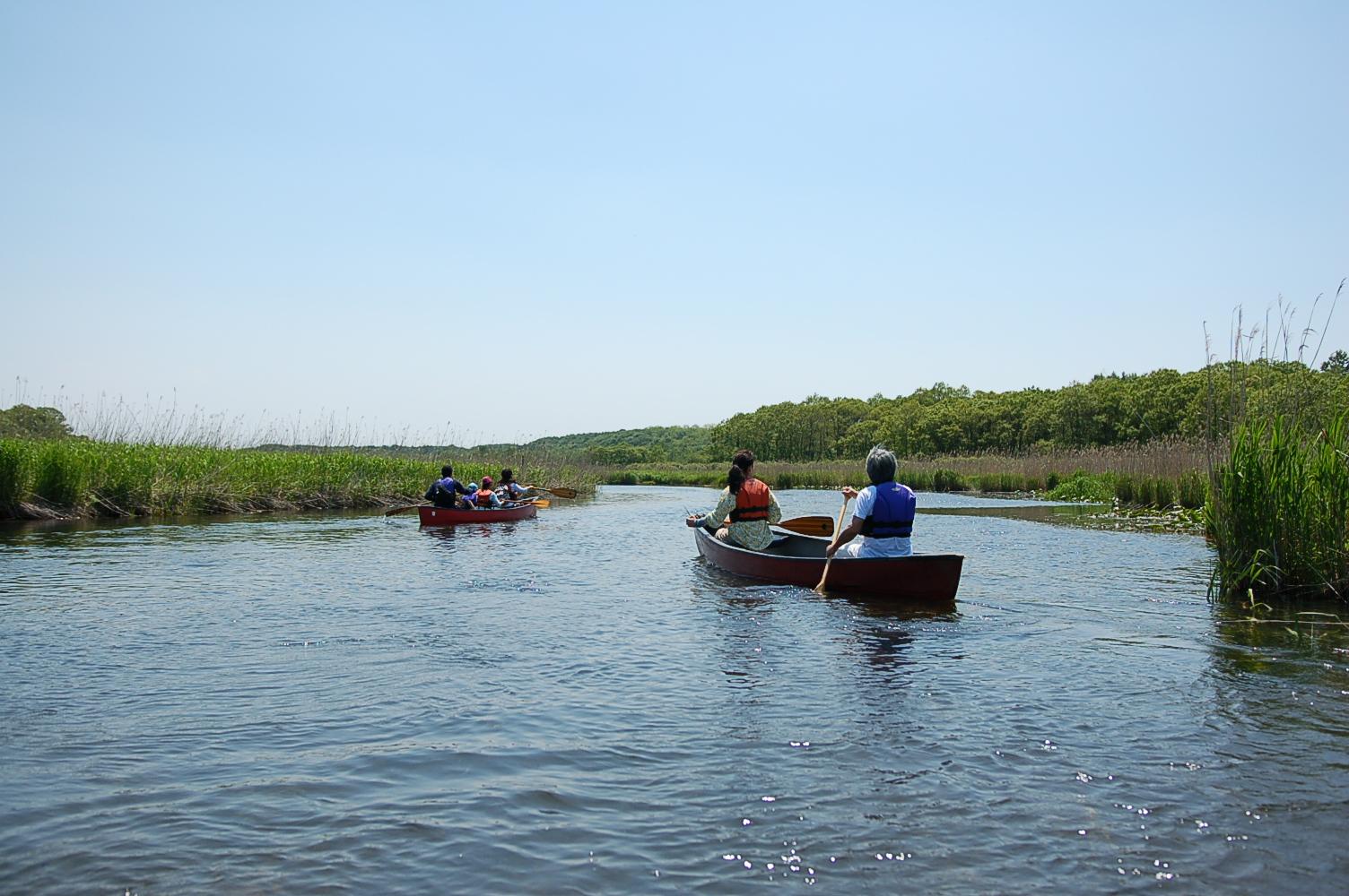 蛇行する湿原風景と森林浴の両方が楽しめる、美々川カヌー下り