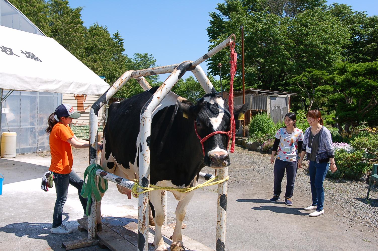 北海道で酪農体験!牛とふれあう牧場ツアーが人気です