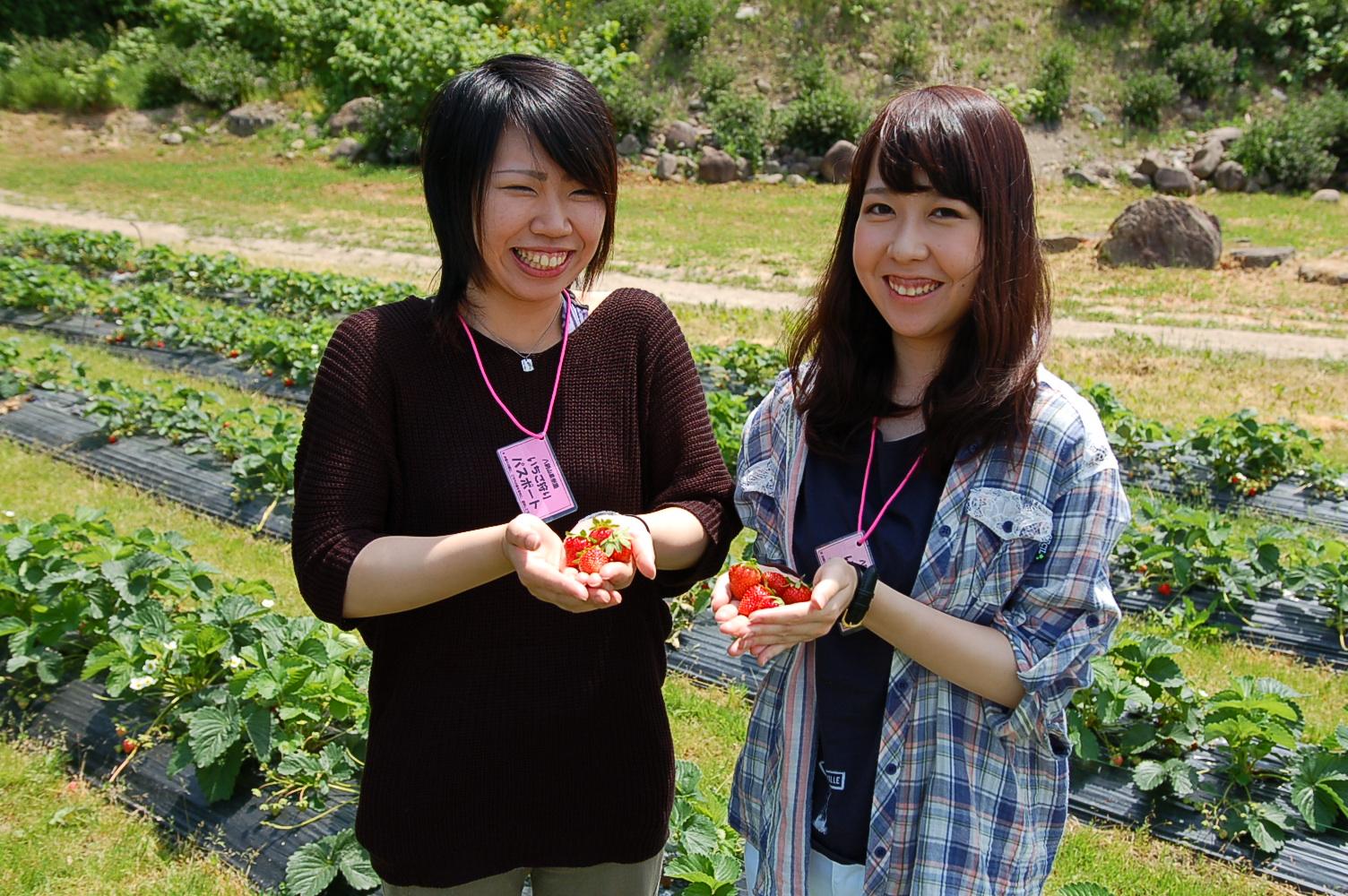 札幌でイチゴ狩りとウェスタン乗馬の両方が楽しめるプランが新登場!