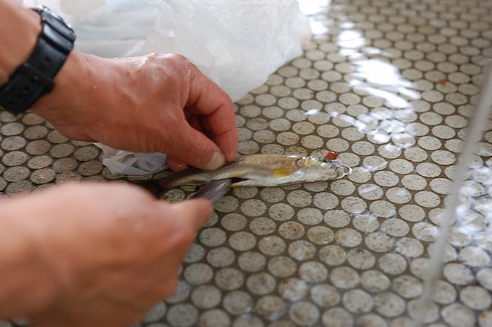 新プラン!支笏湖で釣りと手ぶらキャンプができます