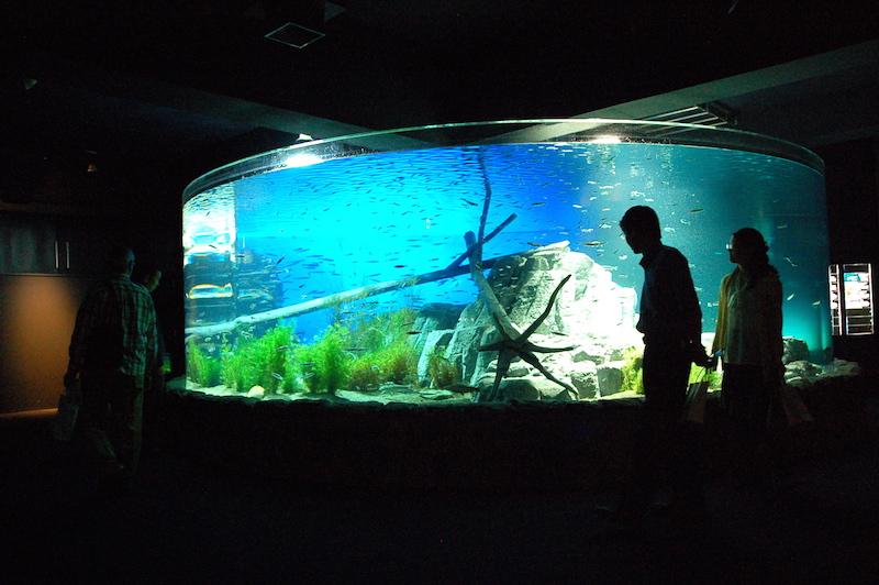 「サケのふるさと千歳水族館」がリニューアルオープン!