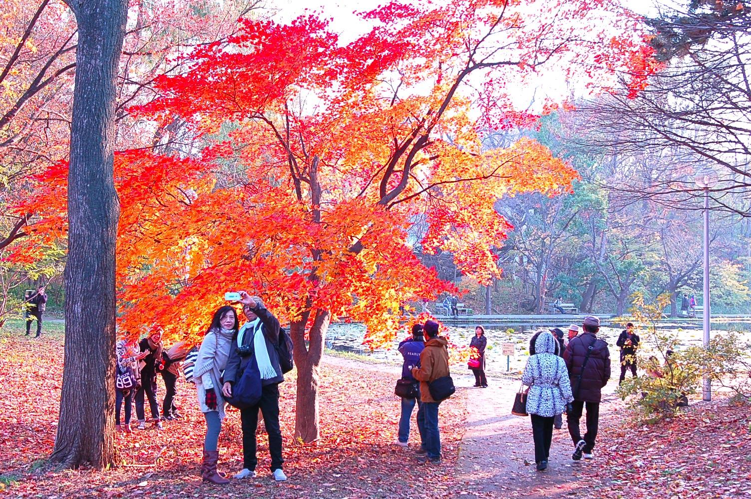 黄金に輝くアーチの下を散策〜北大のイチョウ並木が色づいています!