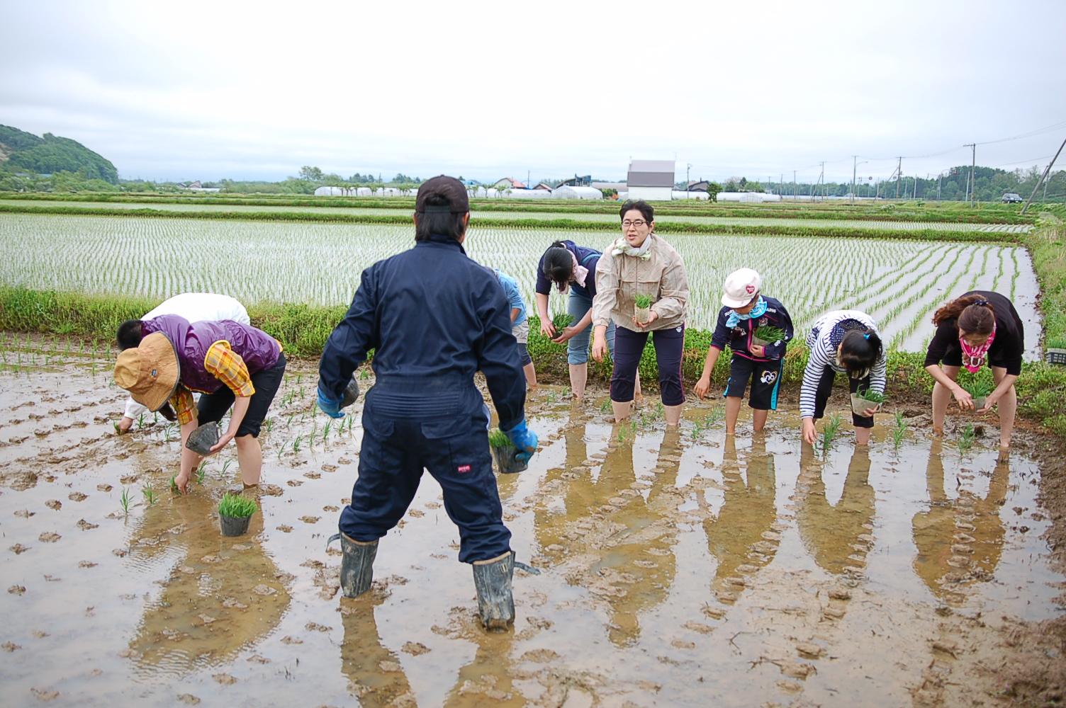 田植え体験のお米が新米となり、プレゼント品として発送いたしました