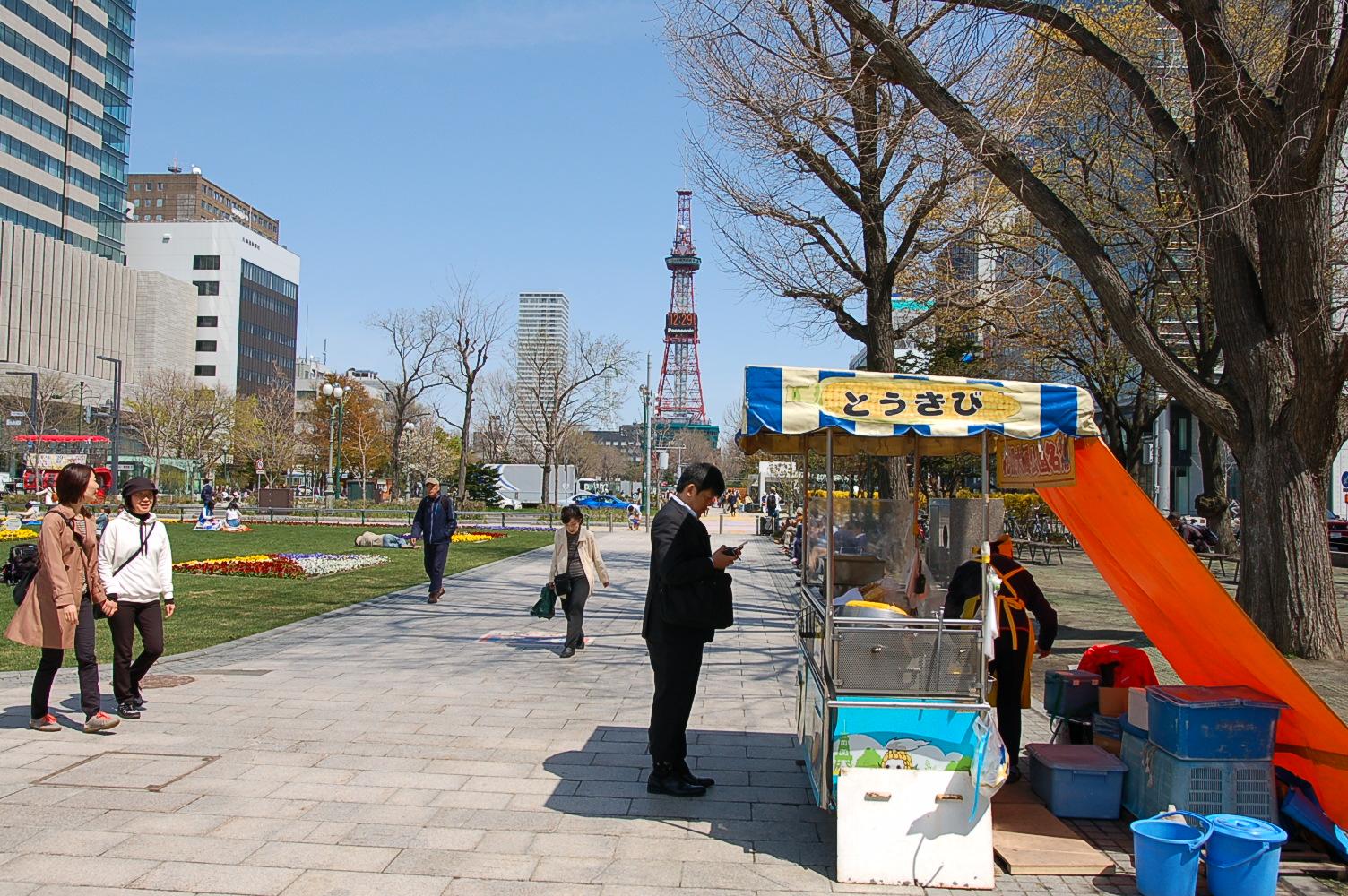 札幌ではようやく春本番!サクラが見ごろを迎えています